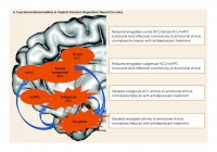 Serotonin Implicit Emotion Circuits