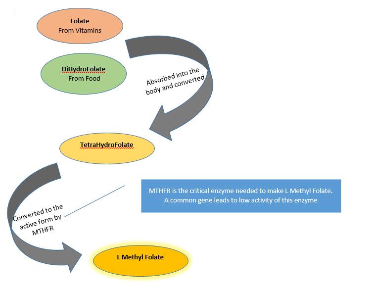 L-Methylfolate for Depression - MoodSurfing