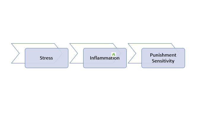 Inflammation and Punishment Sensitivity